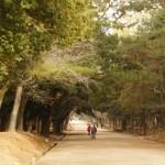Nara_park