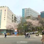 sogang-university-korean-language-course-first-day