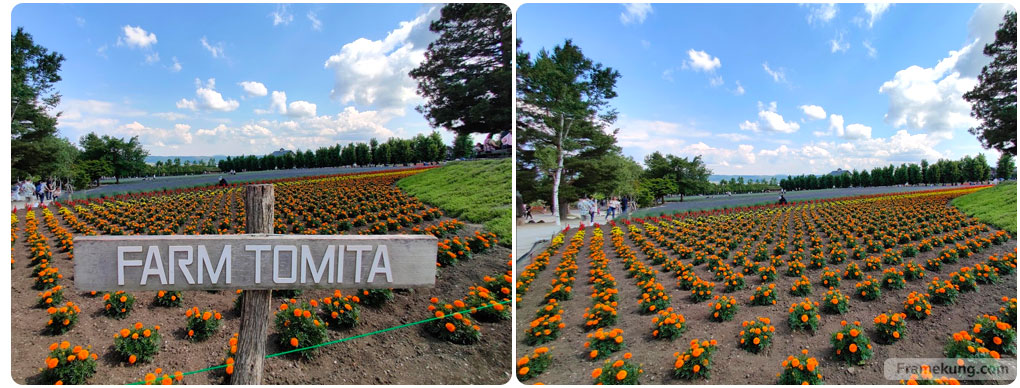 ฟาร์มโทมิตะ Tomita Farm
